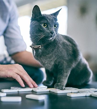 Salute Dei Reni Per I Gatti